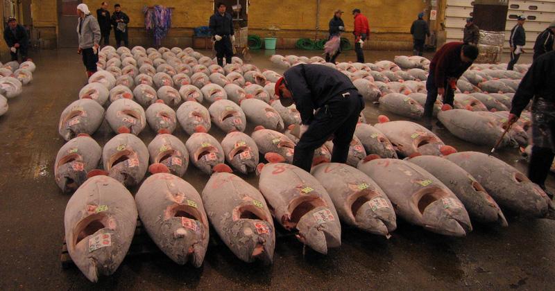 Tonijn veiling op de Tsukiji vismarkt
