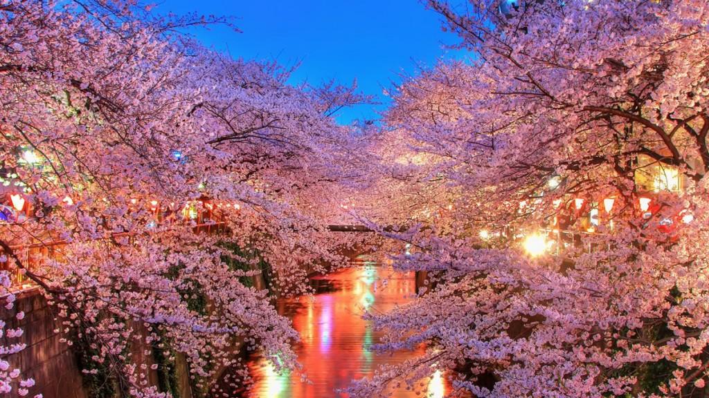 Vakantie in de lente naar Japan