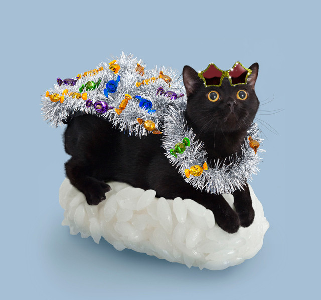 Sushi cats
