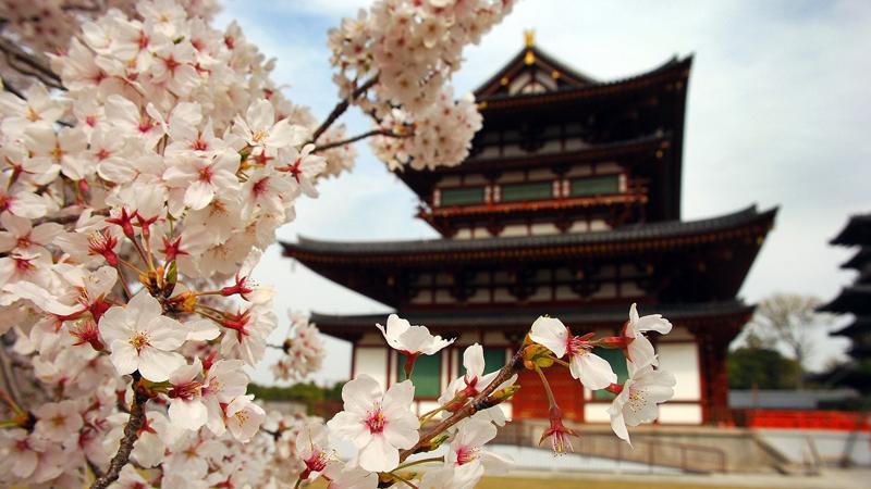 Sakura & tempel in Japan