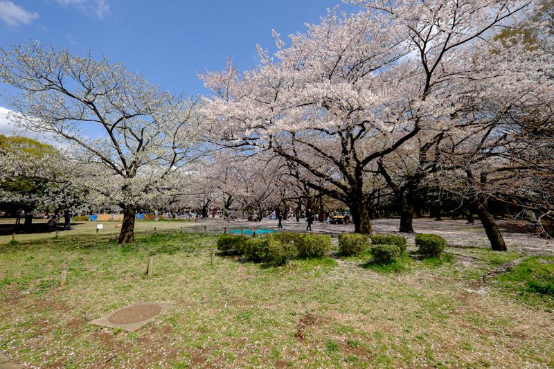 Yoyogi stadspark in Tokyo