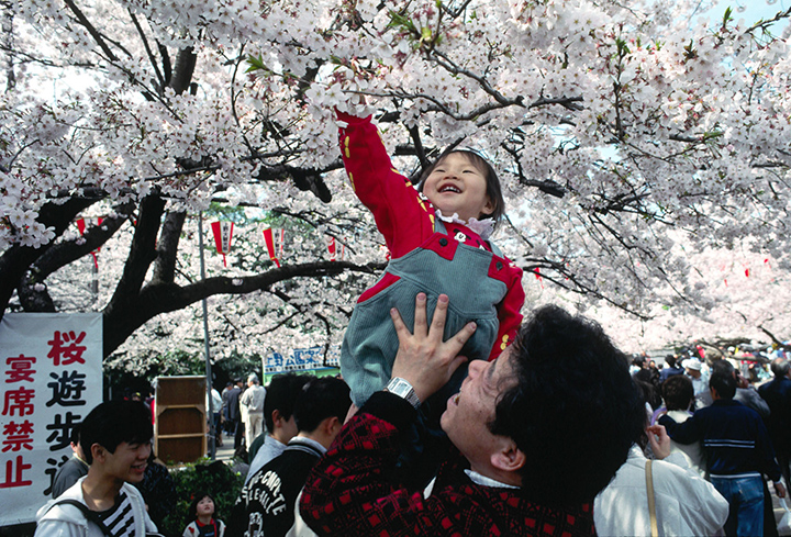 Hanami & sakura in Tokyo