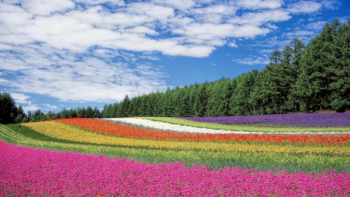 Hokkaido Japan in de lente