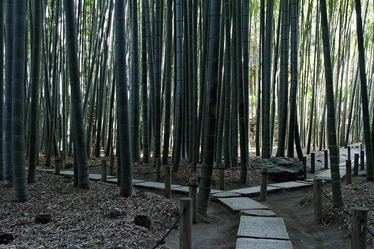 Hokokuji tempel met bamboebos
