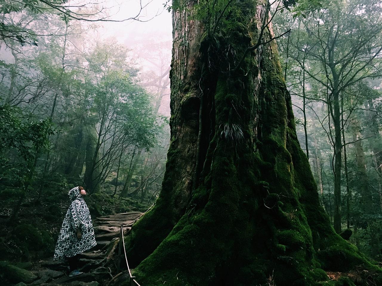 Yakushima Japan