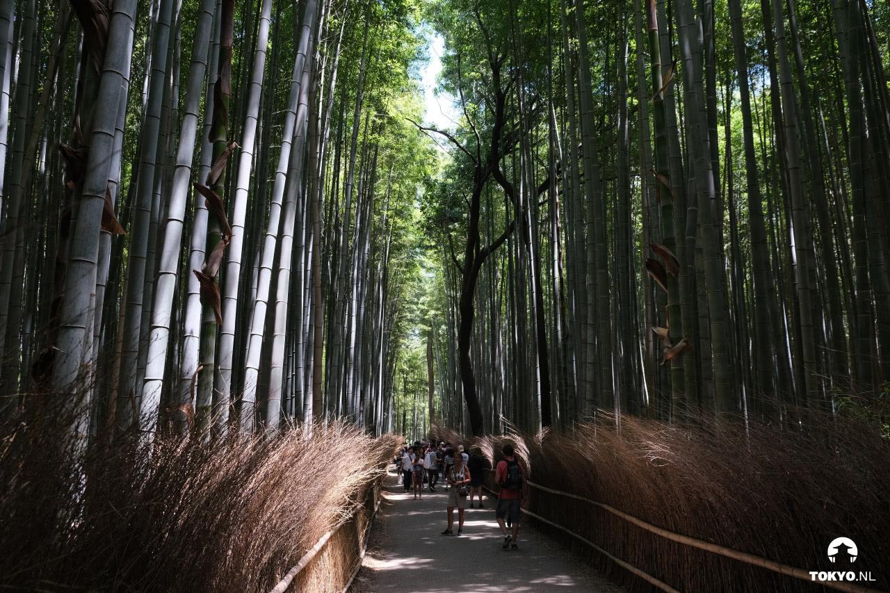 Arashiyama bamboebos Kyoto