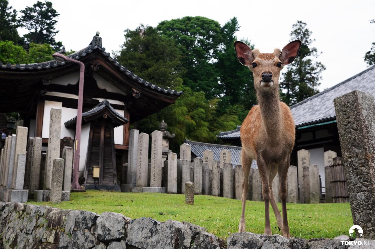 Herten van Nara