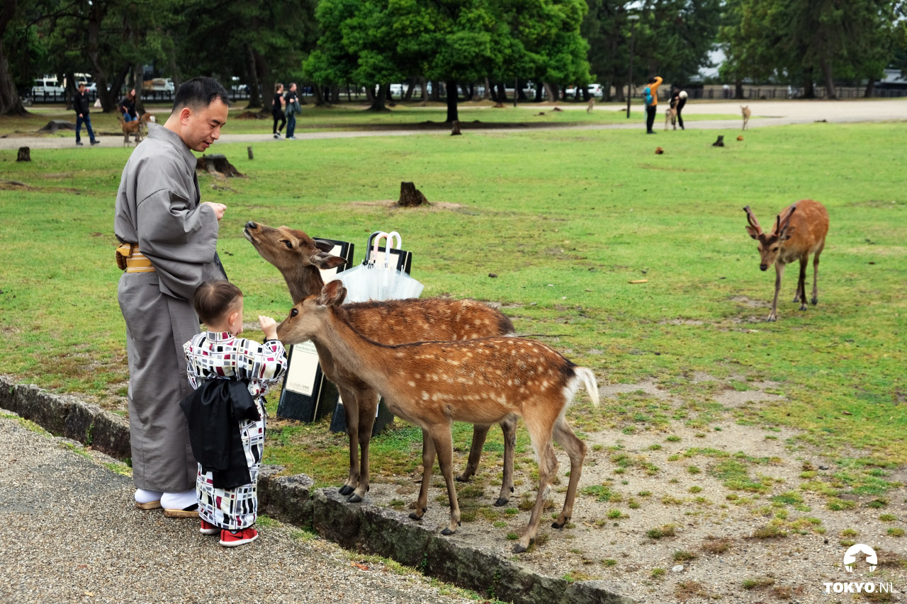 Herten voeren in Nara Park Japan