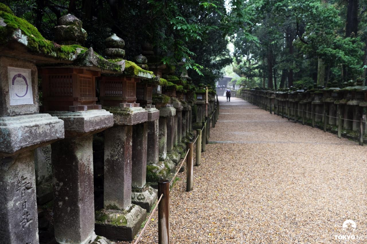 Kasuga-taisha lantaarns