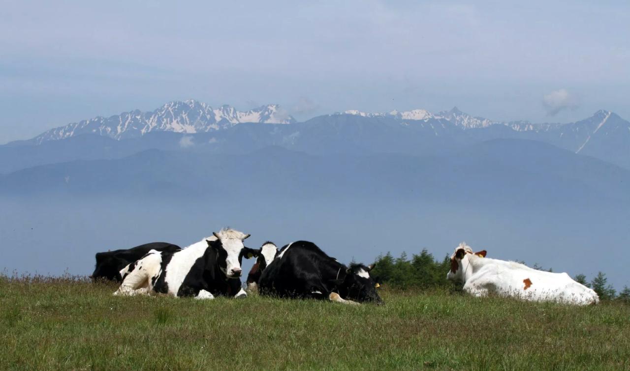 Koeien op het Utsukushigahara plateau