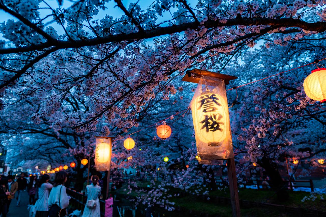 Sakura in Kawagoo