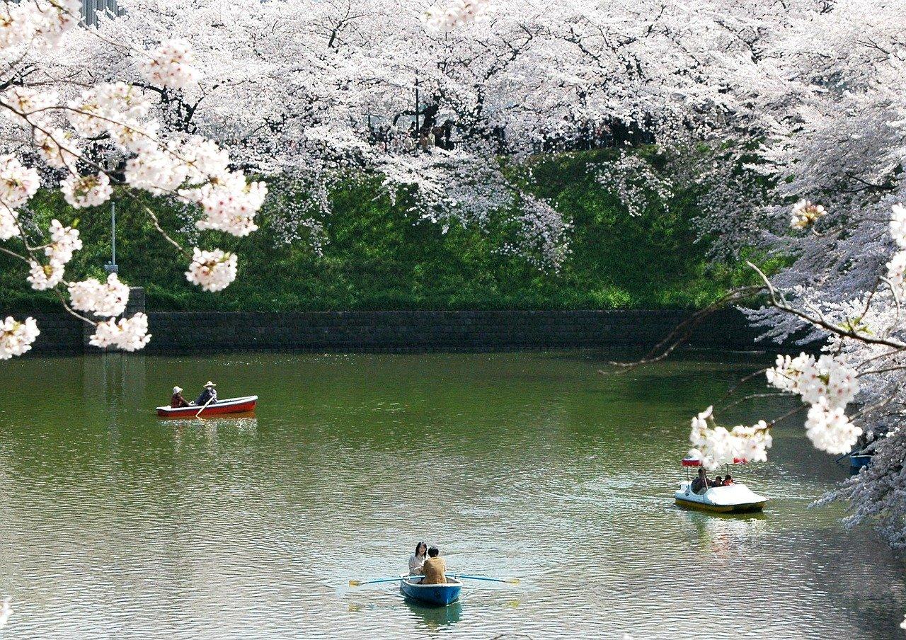 Sakura reistijd Japan