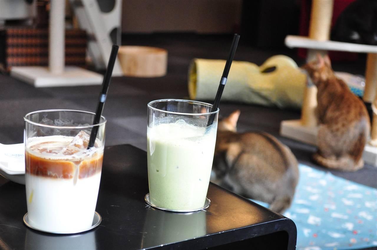 het cat cafe claico in Higashi-Shinjuku