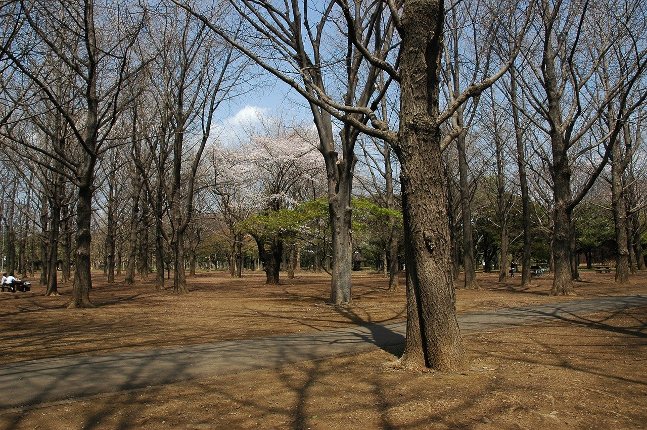 Begin van de lente in Yoyogi