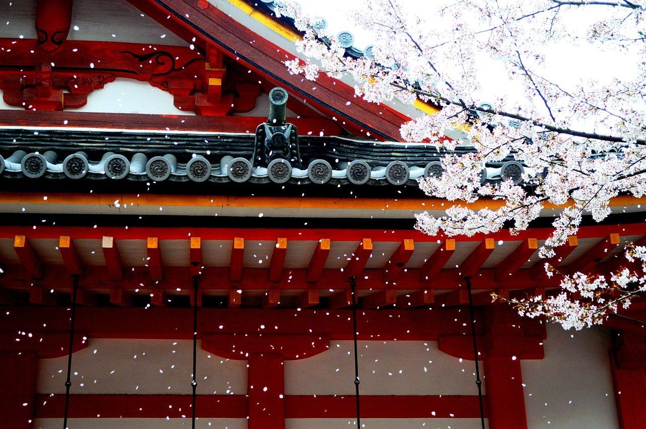 Reizen tijdens de sakura in Japan